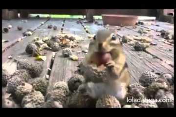 Esquilos deixam-se tocar enquanto comem