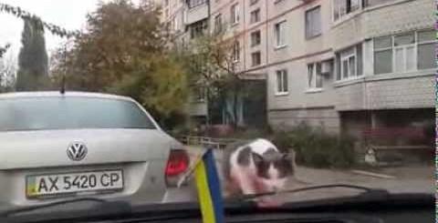 Gato vs Escovas do carro