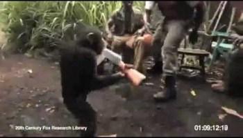 Macaco aprende a atirar de AK-47