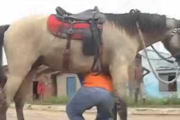cavalo escorregadio
