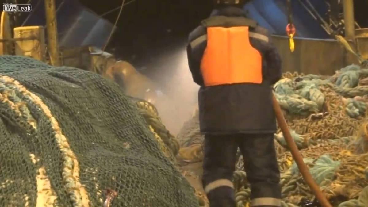 Leão marinho espalha o terror em barco de pesca