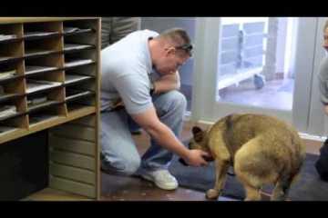 Cão perdido reencontra família