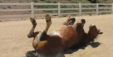 Cavalo solta gases