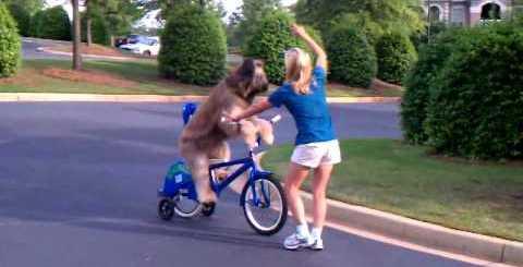 Desde que vi um cão a andar de bicicleta