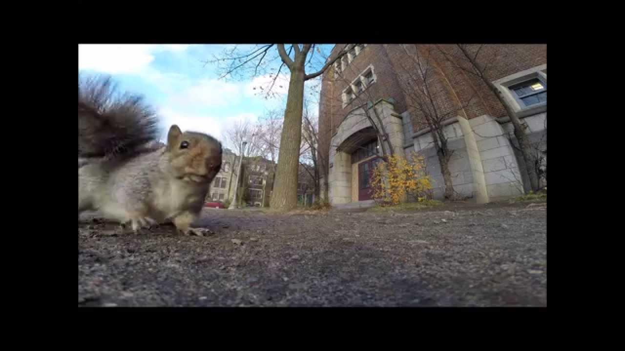 Esquilo rouba GoPro