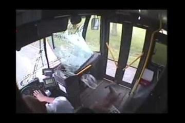 Veado entra em autocarro pelo vidro da frente