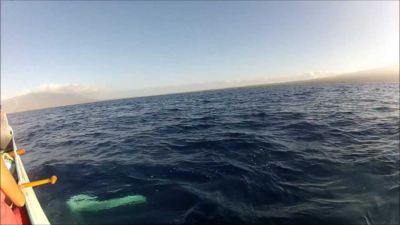 baleia