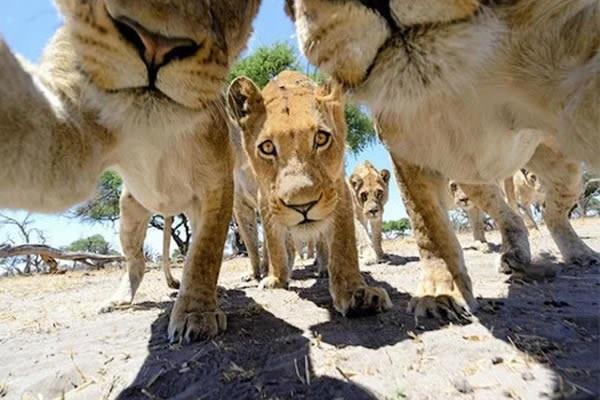 selfies de animais que te vão fazer sorrir