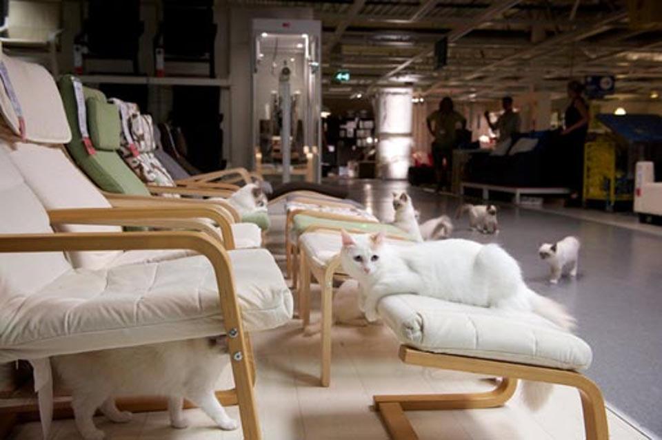 IKEA solta 100 gatos numa loja vê só o resultado!
