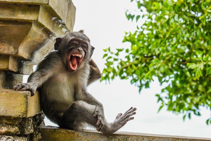 Vida selvagem em fotos hilariantes - macaco