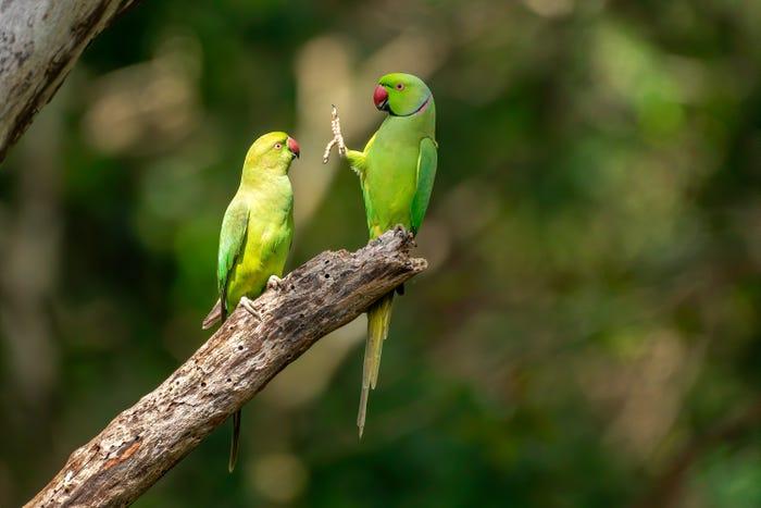 Vida selvagem em fotos hilariantes - perquito e o distanciamento social