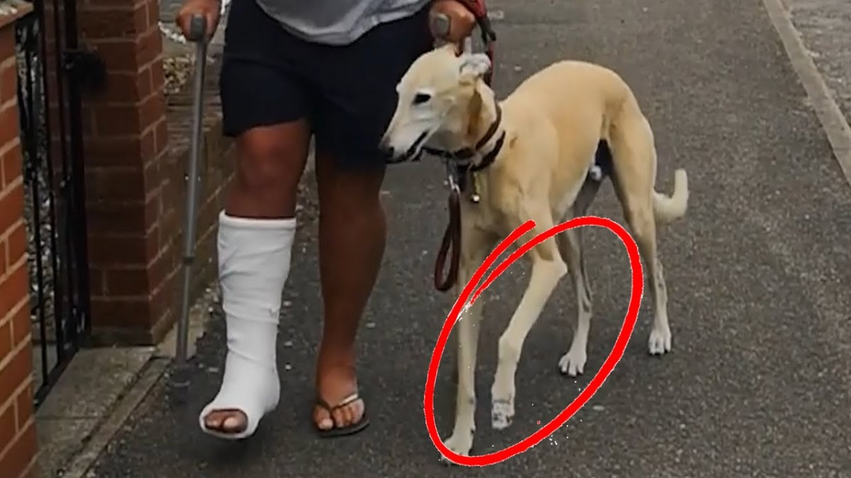 Cão imita dono a coxear por simpatia