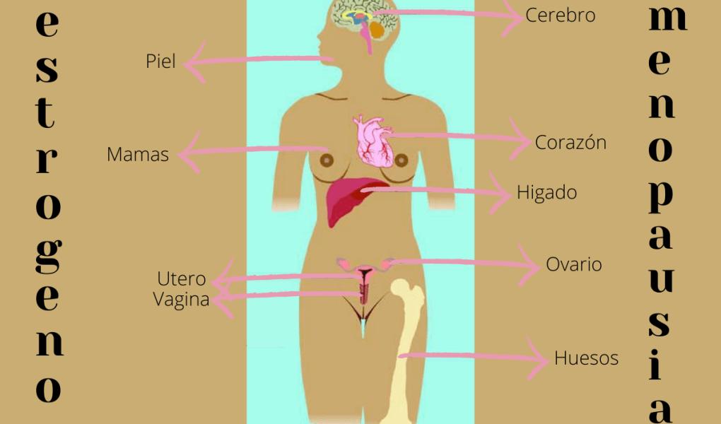 El estrogeno en la menopausia