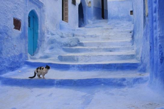 Blue Cat, Chefchaouen