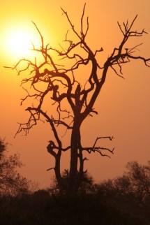 Africa sunrise