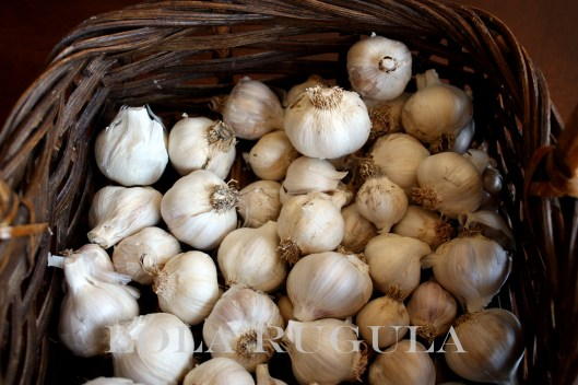 lola rugula homegrown garlic