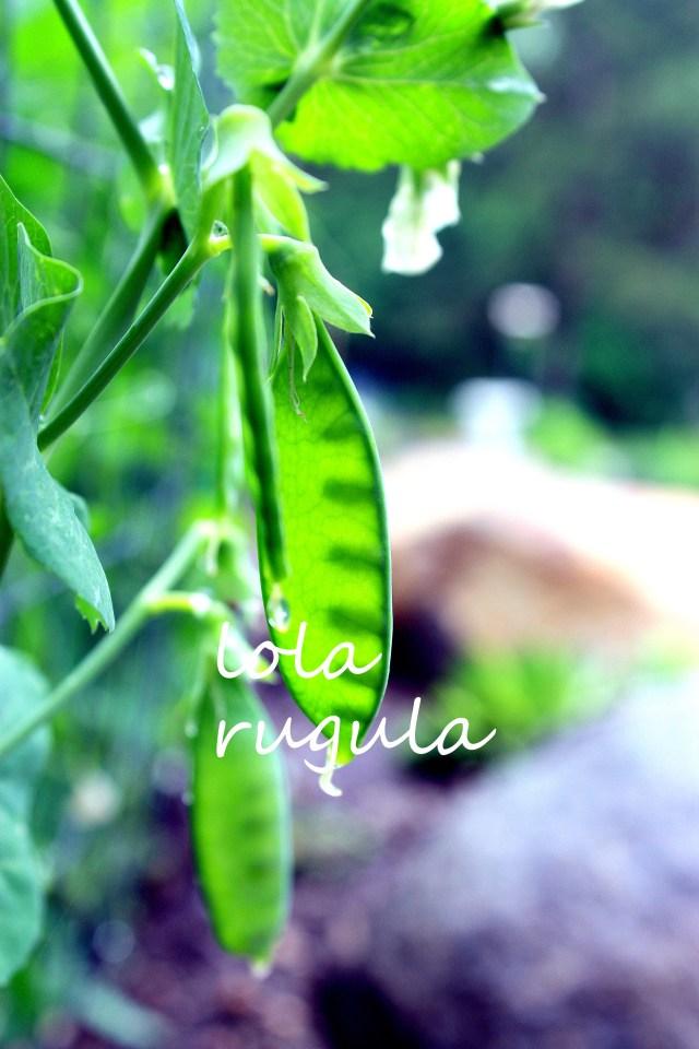 lola-rugula-fresh-peas