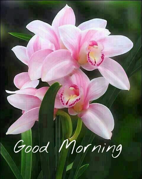 Good Morning Flowers For You
