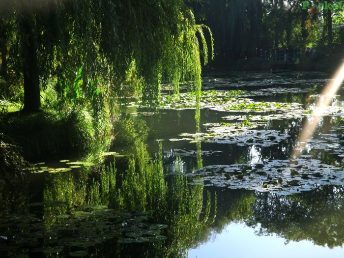Espelho d'água - Giverny