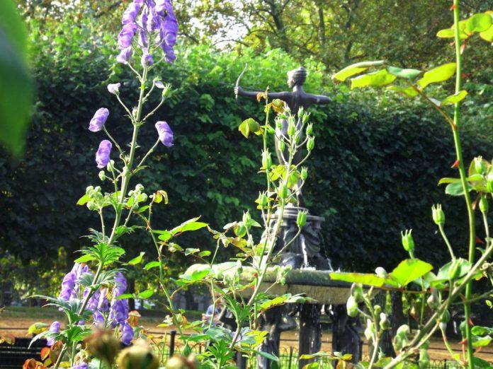 Rose Garden - Hyde Park - Londres