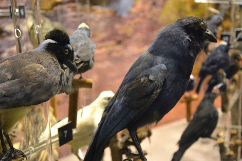 Colonia del Sacramento - Museu Paleontológico