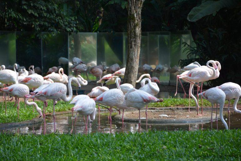 Parque das Aves - Flamingos