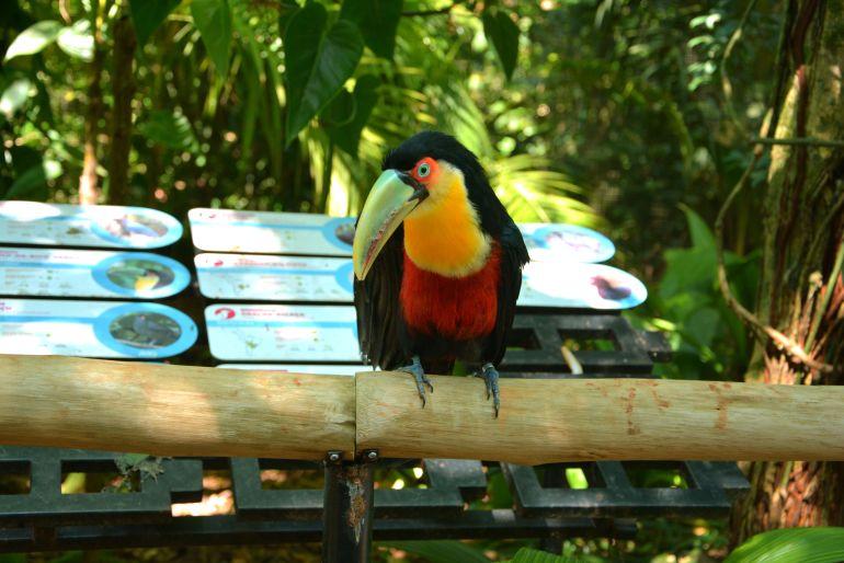 Parque das Aves - Tucano