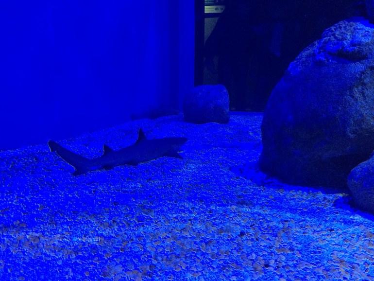 AquaRio - Filhote de Tubarão