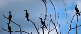 Roteiro e dicas para 2, 3 ou 4 dias no Pantanal de Corumbá (MS)