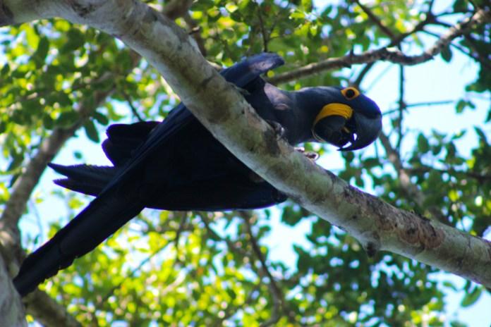 Pantanal - 12