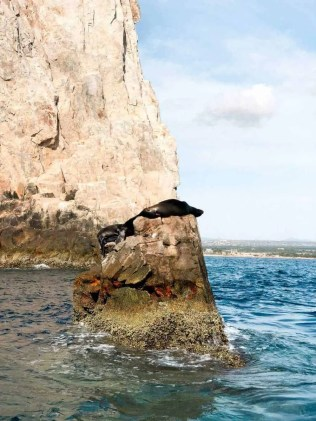 Cabo San Lucas Blog - Seal Spotting