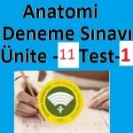 Anatomi-Deneme-Sınavı-Ünite-11-Test-1