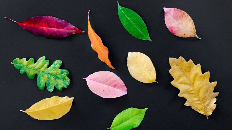Different colours and shapes of leaves representing different seasons