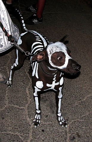 Awesome Dog Skeleton Halloween Costume
