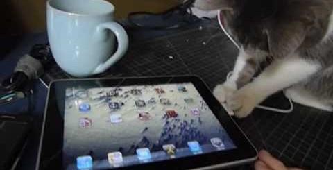 Cat vs iPad