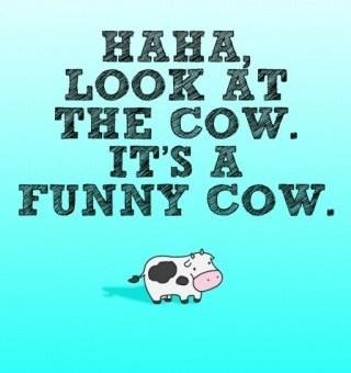 Ha. Look. It's a Funny Cow.