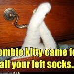 LOL Zombie Cats Steal Socks
