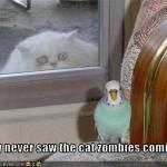LOL Zombie Cats Eat Birds