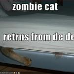 LOL Zombie Cats Return From Dead
