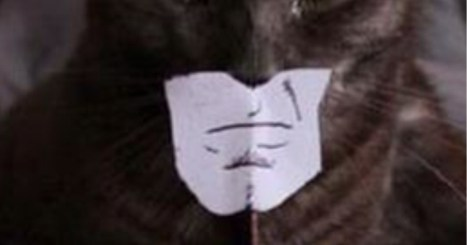 Bat Cat Is Here To Protect You