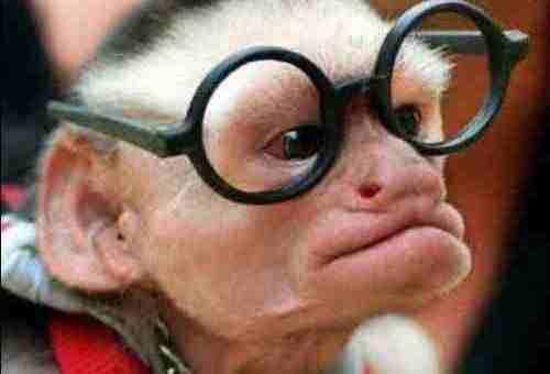 I See Said The Little Monkey