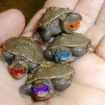 Tiny Real Teenage Mutant Ninja Turtles