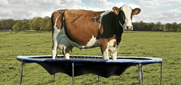 Home Grown Milk Shakes