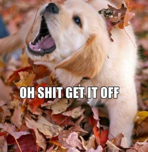 Is there anything worse than falling leaves?
