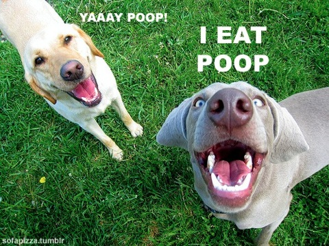 Yea! Poop.