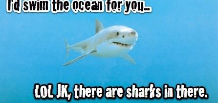 love sharks