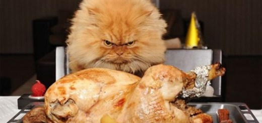 Cat wanting Turkey