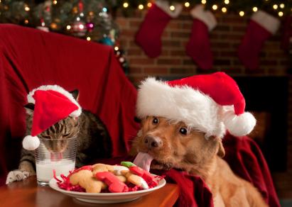 Just one bite, Santa won't notice.