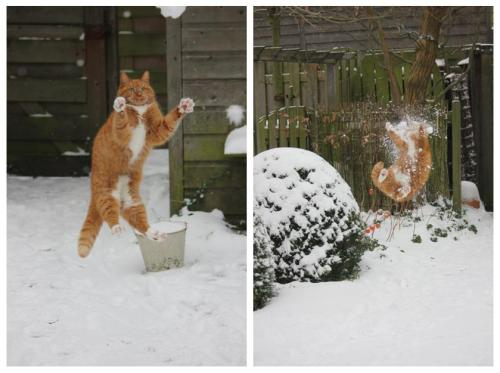 Snowball Kitty