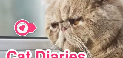 Cat-Diaries